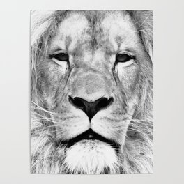Lion, Animal, Scandinavian, Minimal, Trendy decor, Interior, Wall art Art Poster
