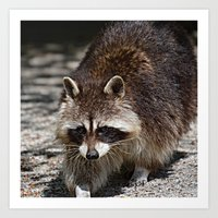 rocket racoon Art Prints featuring Racoon by MehrFarbeimLeben