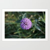 clover Art Prints featuring Clover by Bud M