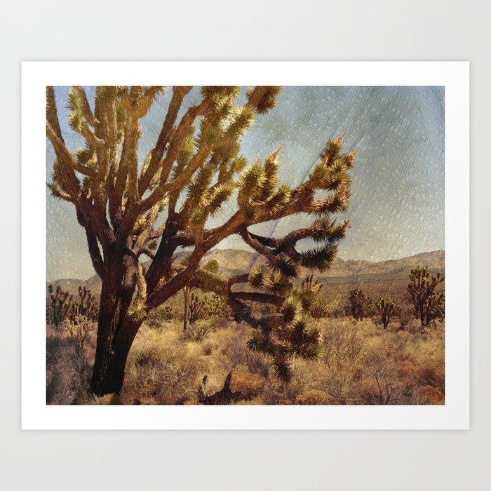 Joshua tree in Mojave desert Art Print