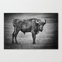 buffalo Canvas Prints featuring Buffalo by davehare