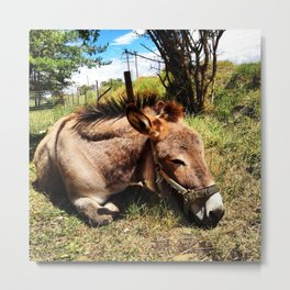 Sleeping Donkey Harry Metal Print