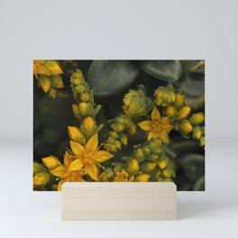 TINY YELLOW STARRY STONECROP FLOWERS Mini Art Print