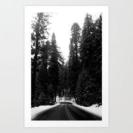 Sequoia Snow Art Print