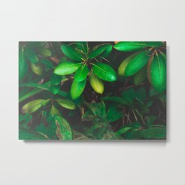 Hiding in the garden Metal Print