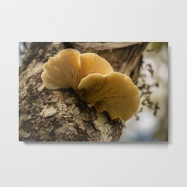 Mushrooms in the Forest Metal Print