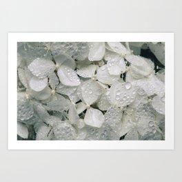 Hortênsias brancas com água Art Print