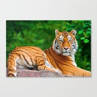 asian Canvas Prints featuring Asian Tiger by Tom Lee