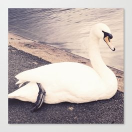 The Swan Canvas Print