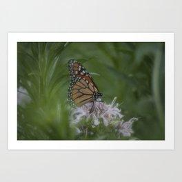 Monarch Butterfly X Art Print