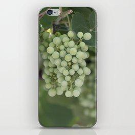 grape grows on vineyard in spring iPhone Skin