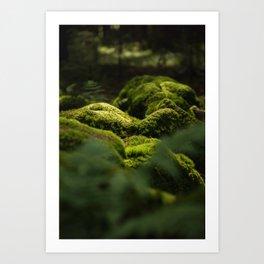 Forest Calm Art Print