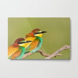 Close-up of colorful bright bee-eaters on tree branch in sunlight. Metal Print