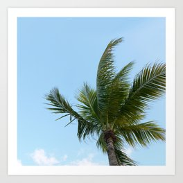 KEYWEST PALM TREE Art Print