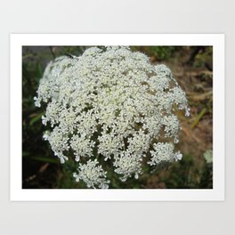 The Queen's Lace Art Print
