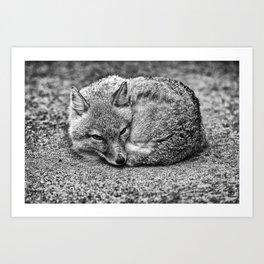TINY FOX Art Print