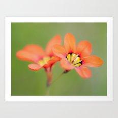 Bloomin Pretty Art Print