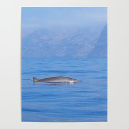 Beaked whale in the mist Poster