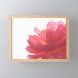Pink peony Framed Mini Art Print