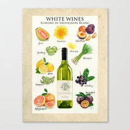 WHITE WINES - Flavors in Sauvignon Blanc Canvas Print