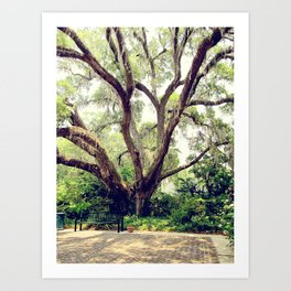 Under the Live Oak Art Print