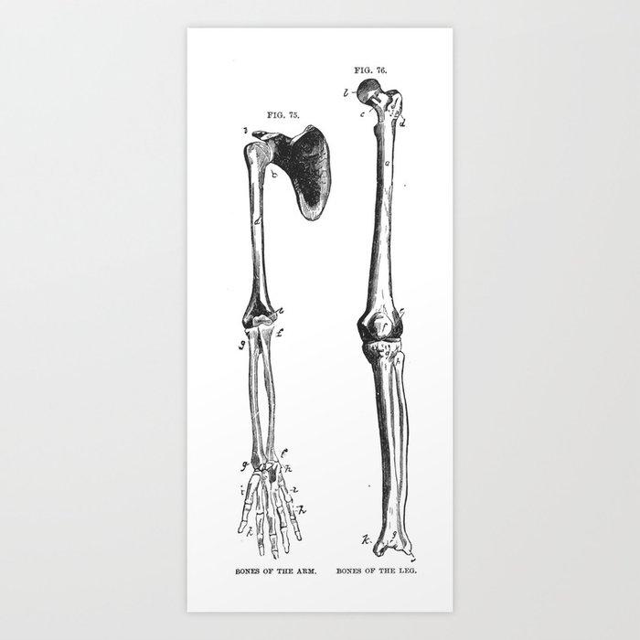 Bones Of The Arm And Leg Art Print By Andipantz Society6