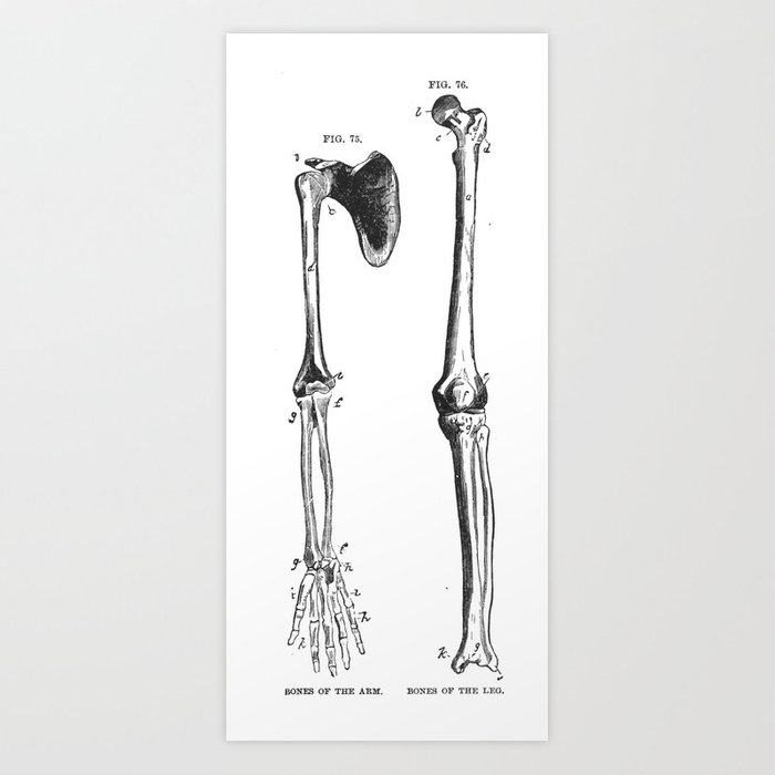 Bones of the arm and leg Art Print by andipantz | Society6