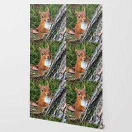Nature woodland animals smiling squirrel Wallpaper