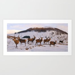 The Gathering of Stags Art Print