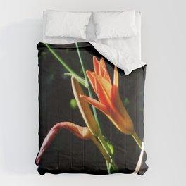Orange Daylilies Shines Comforters