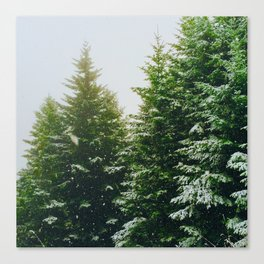 Winter Pine Tree Forest (Color) Canvas Print