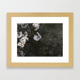 Cherry Blossoms By The River in Japan Framed Art Print