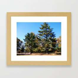 Magnificent Pines Framed Art Print