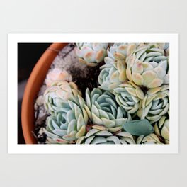 California Potted Succulents Art Print