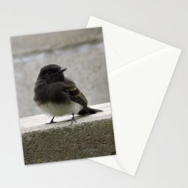 Young Black Phoebes Stationery Cards