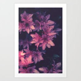 Death by Pink Art Print