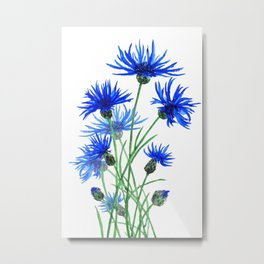 blue cornflower Metal Print