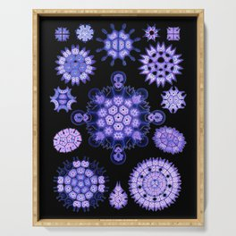 Ernst Haeckel - Melethallia (Purple) Serving Tray