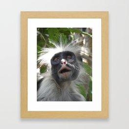 Red Colobus Monkey Framed Art Print