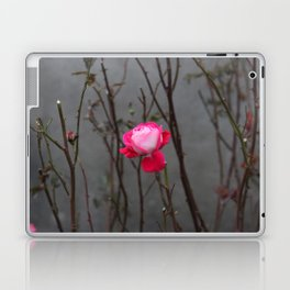 Bi-color rose Laptop & iPad Skin