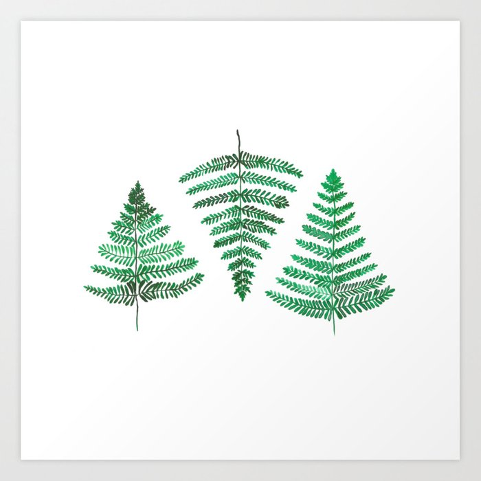 Fiordland Forest Ferns Art Print