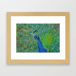 Peacock Illustration Framed Art Print