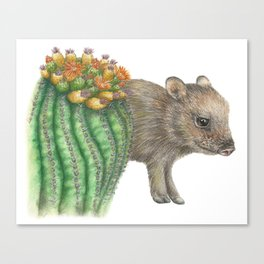 Javelina and Barrel Cactus Canvas Print