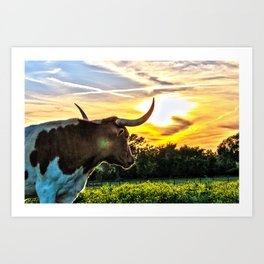 Illuminated Longhorn Sunset Art Print