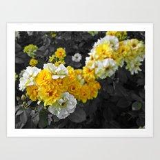 Golden Shower Rose Art Print