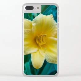 Yellow Day Lily on Green Blue Background Clear iPhone Case