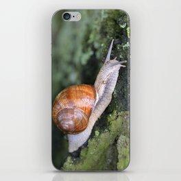 Snail 1 iPhone Skin