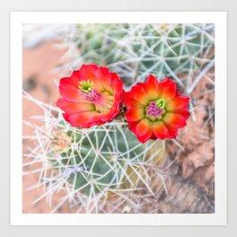 Mojave Mound Cactus Flowers Art Print