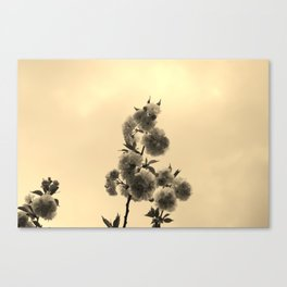 Flora 1  Canvas Print