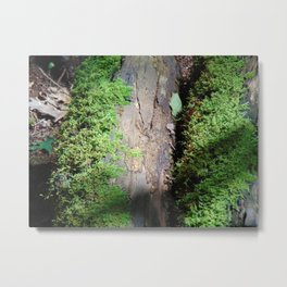 A Walk in the Woods part 2 Metal Print
